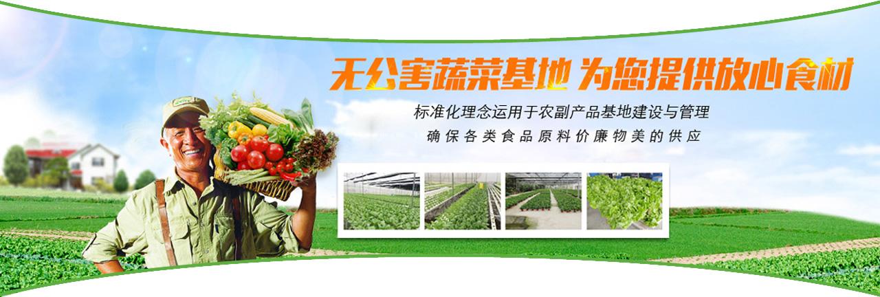 绿色蔬菜,放心食材